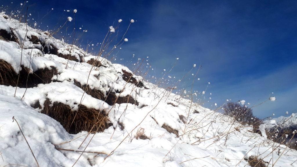 Ogni rametto ha il suo batuffolo di neve fresca appiccicato sopra