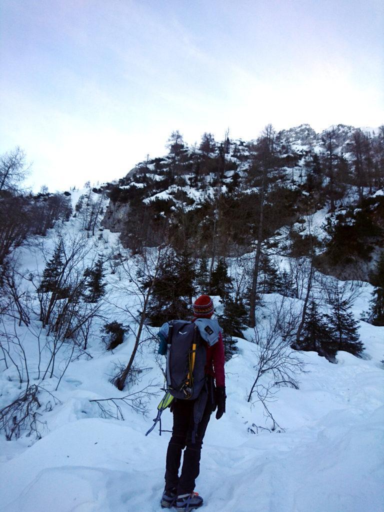 questo è il punto dove abbiamo abbandonato il sentiero per puntare alla nostra cresta, verso la bastionata rocciosa che si intravede tra gli alberi