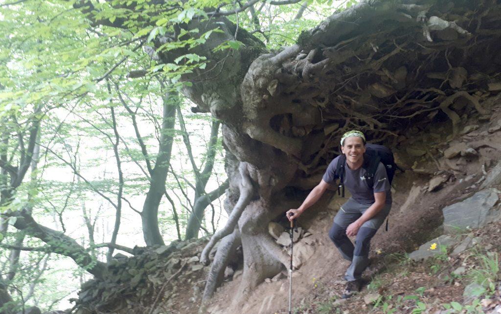 Quest'albero cresciuto lungo il dirupo crea una sorta di riparo naturale tramite le sue radici