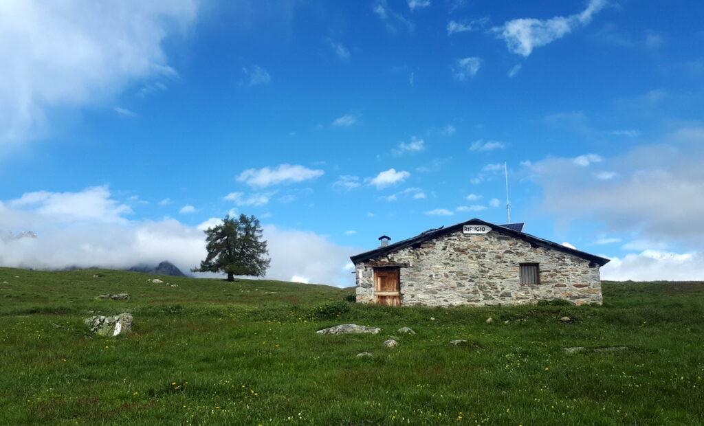 il bivacco dell'Alpe Granda e il larice solitario