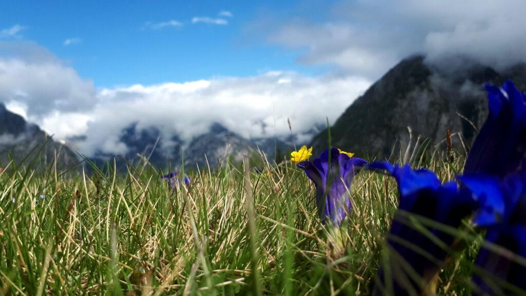 Altro gioco di soft focus con la primavera che prende vita