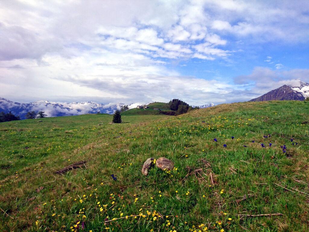 Vista d'insieme dei pratoni dell'Alpe Granda