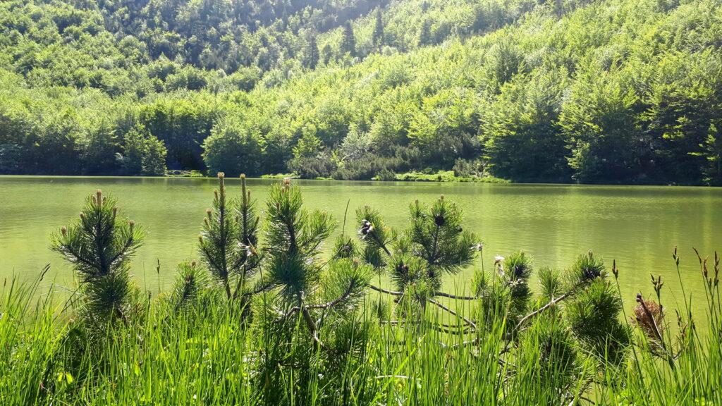 Il Lago Nero in realtà ha un colore verde incredibile tanto da mischiarsi con la vegetazione
