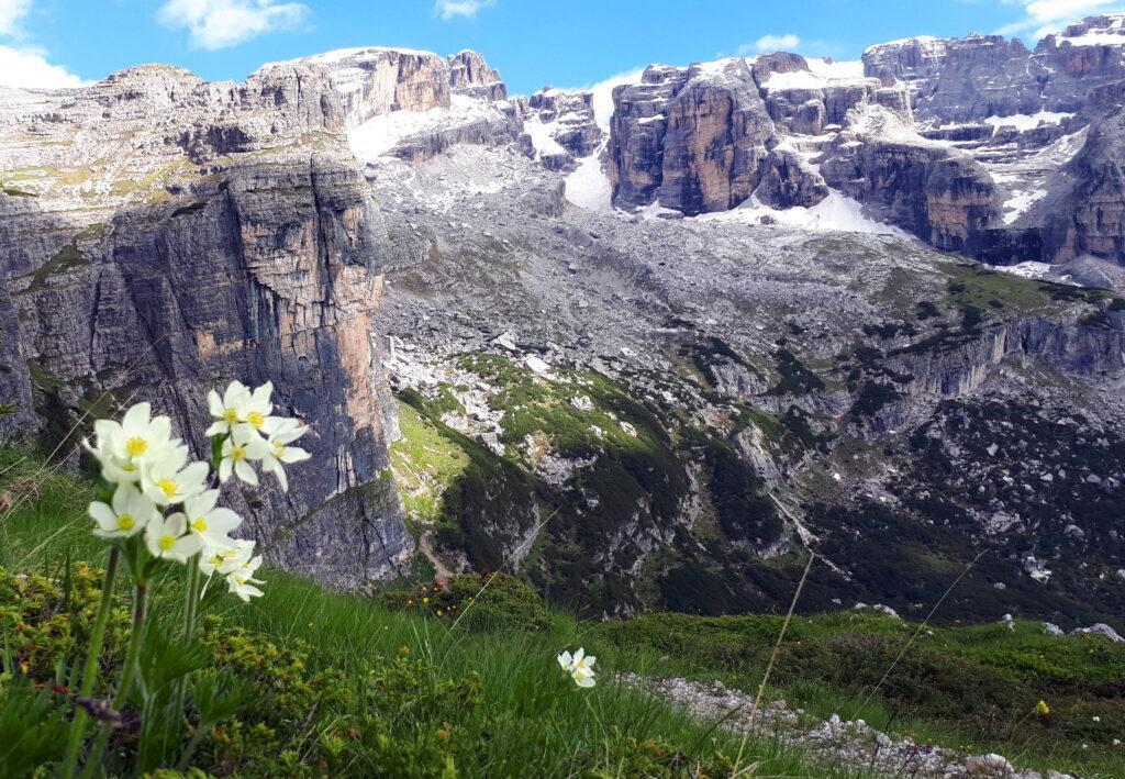Bellissimi fiori alpini, lo spallone del primo torrione della Corna Rossa e il Brenta sullo sfondo