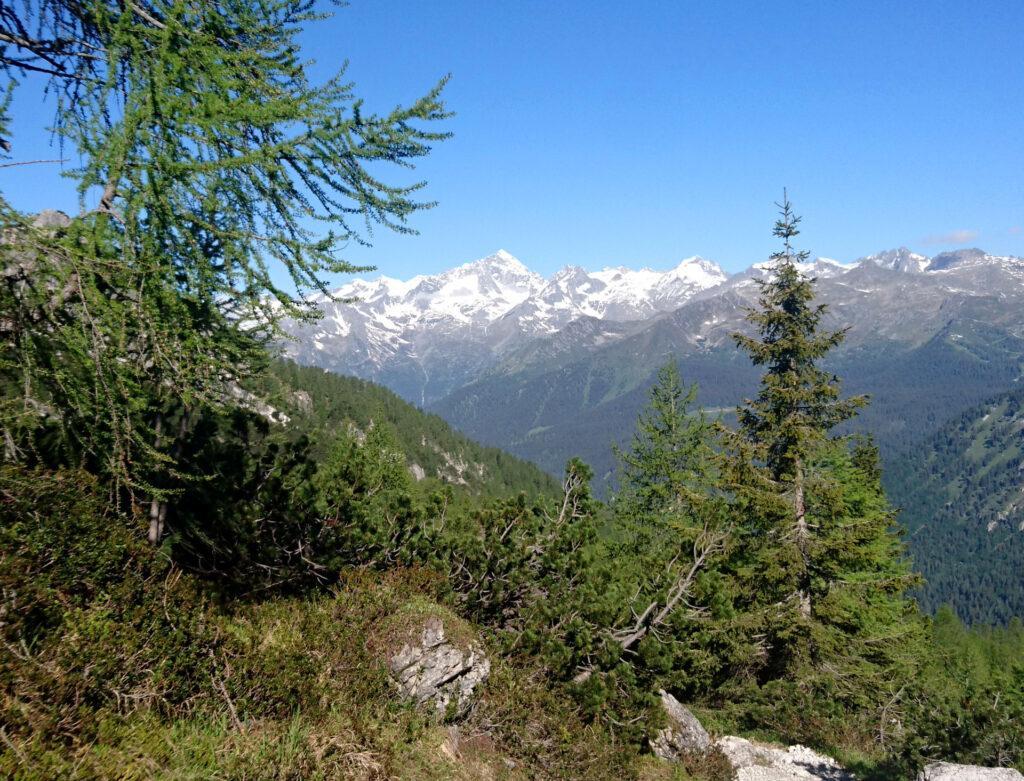 La Presanella vista dal sentiero che porta al Tuckett