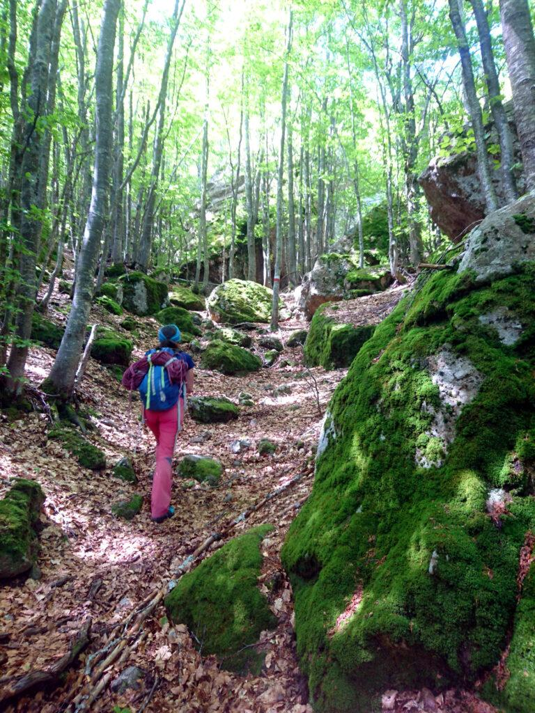 Il bosco che conduce al Bivacco Sacchi passando accanto a svariati boulder