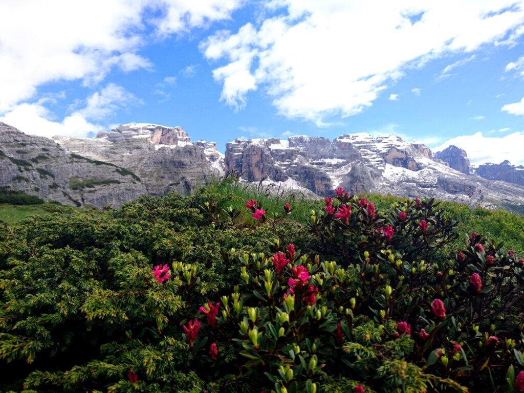 Vista del Brenta dal sentiero che dal Graffer scende verso Vallesinella