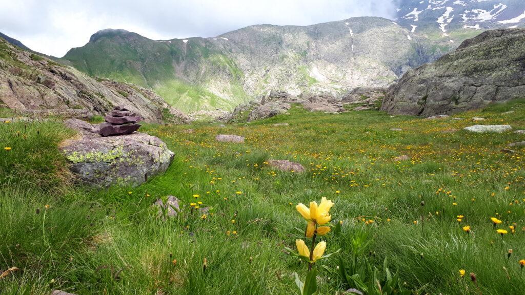 La bella valletta fiorita che dal Passo di Sardegnana scende verso il Lago Colombo