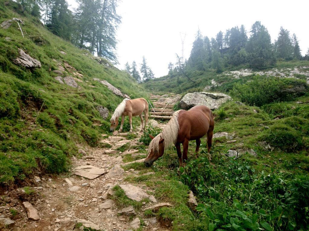 Scendendo dal sentiero 211 dei Laghi Gemelli incontriamo tante altre bestiole