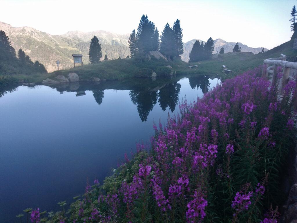 il laghetto di Passo Manghen già ci sembra bellissimo: volevamo fare scorta d'acqua ma un simpatico fiammasco ci ha fatto notare che l'avremmo trovata più avanti...
