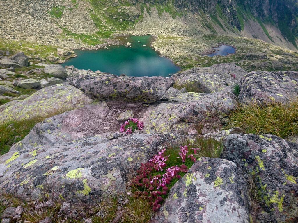 la natura qui è davvero bellissima, e la si gode appieno perchè dopo il Lago delle Stellune si incontra davvero poca gente