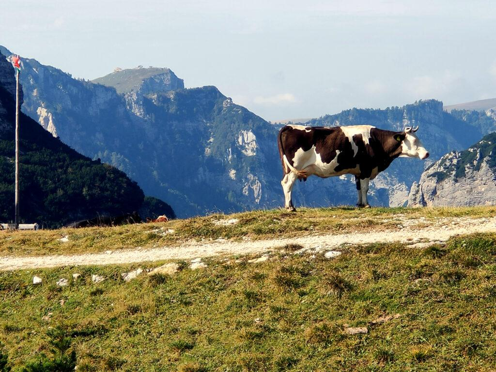 Questa mucca aveva la tendenza a mettersi in posa stagliandosi contro l'orizzonte. Ne abbiamo approfittato ;)