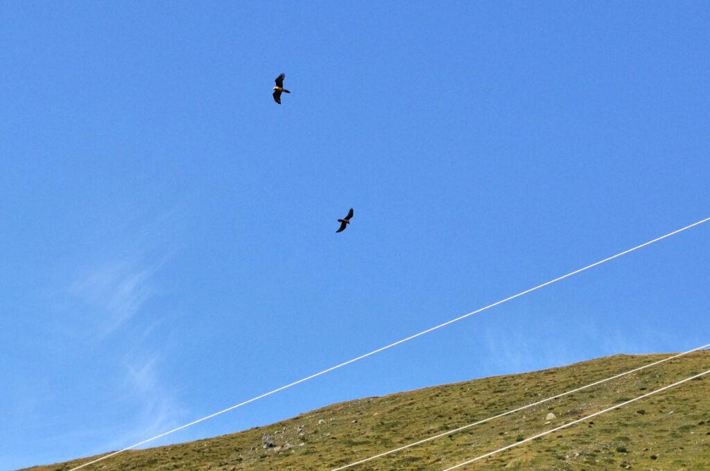 la danza delle aquile in volo, che hanno avvistato qualcosa