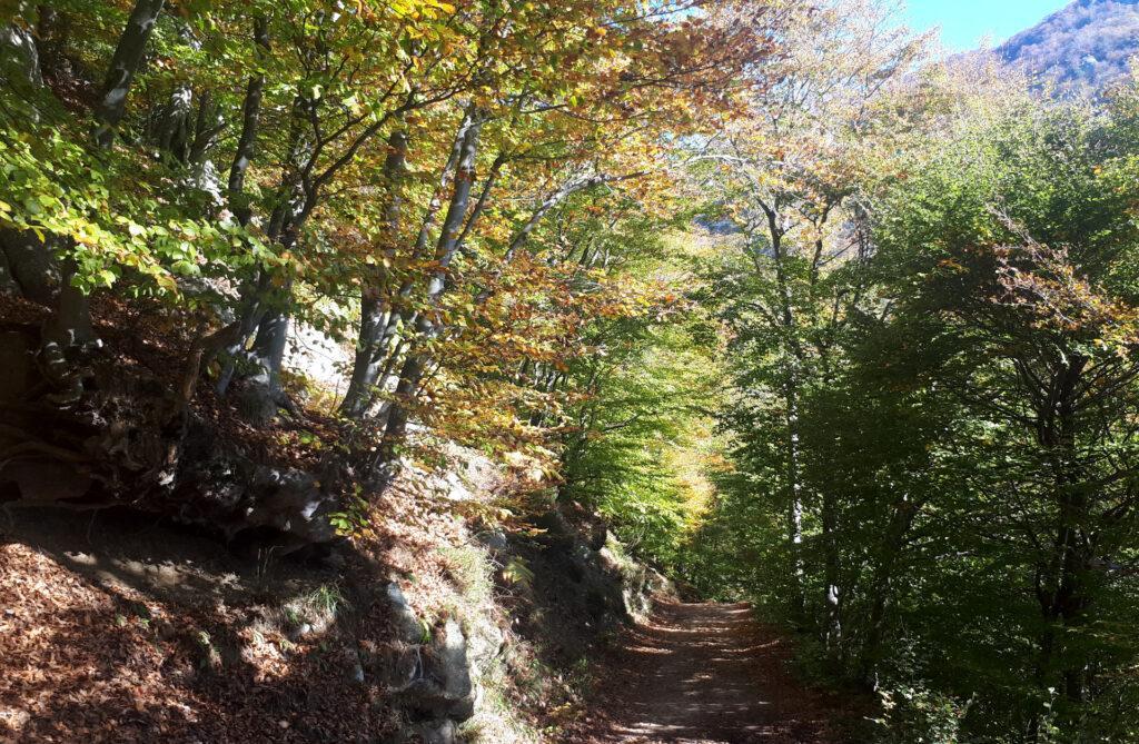 la strada nel bosco che si percorre per raggiungere il Rifugio Melano