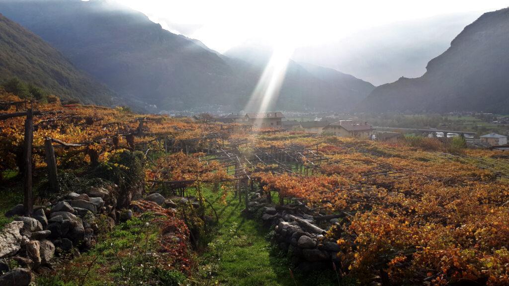 le meravigliose vigne che si attraversano salendo ad Albard