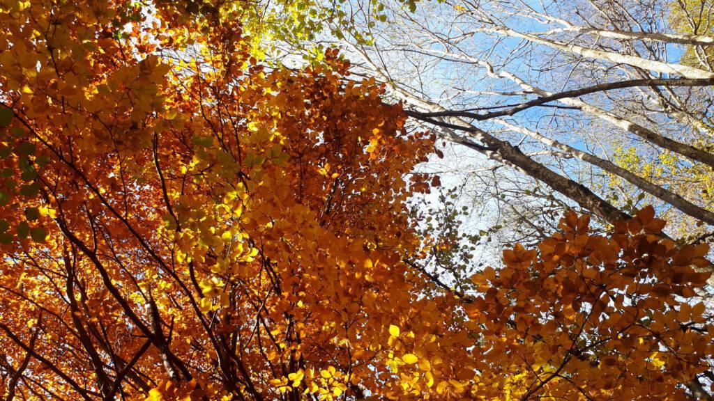 la bellezza del bosco d'autunno