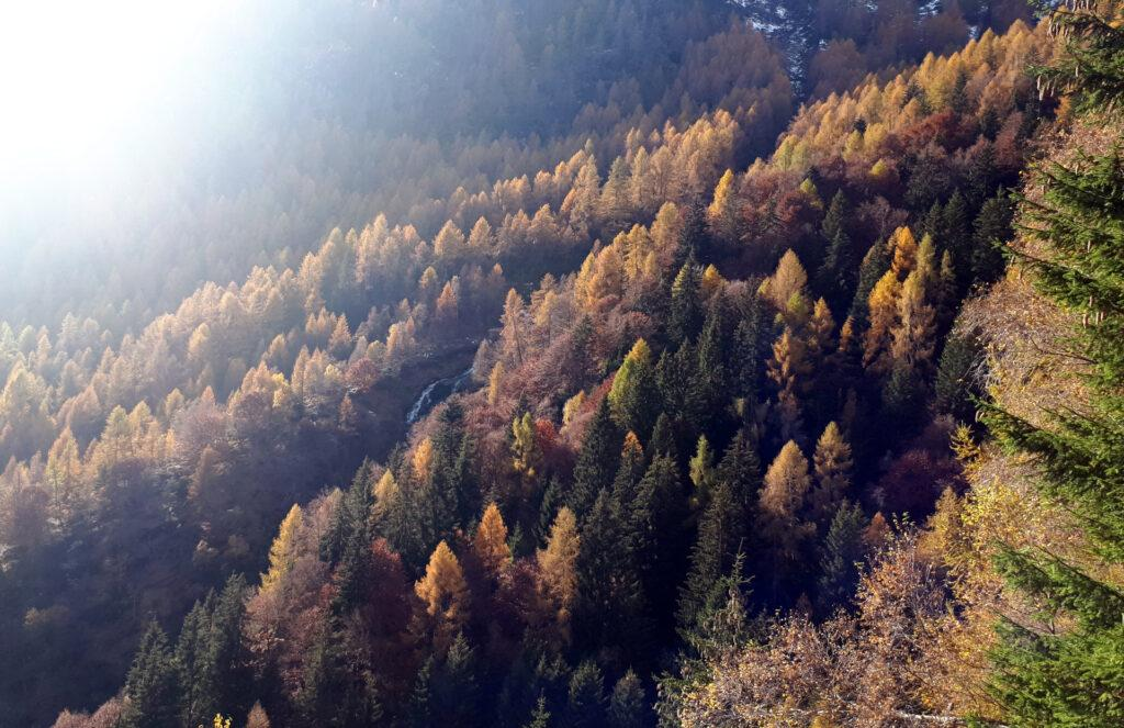 beh... l'autunno è l'ora magica delle stagioni!