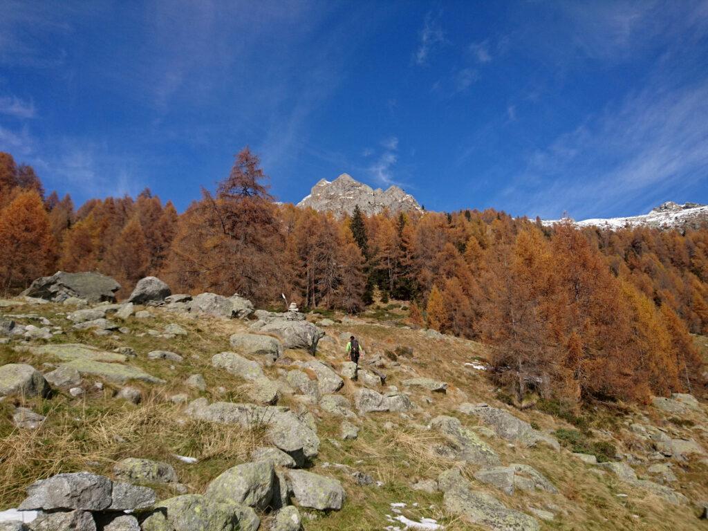 seguiamo gli ometti, puntando all'ultimo tratto di bosco, ormai tutte conifere, che dovremo attraversare