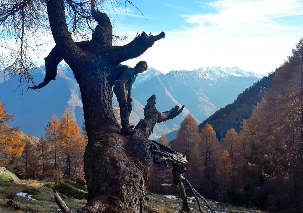morto in piedi bellissimo (l'albero... ovviamente!)