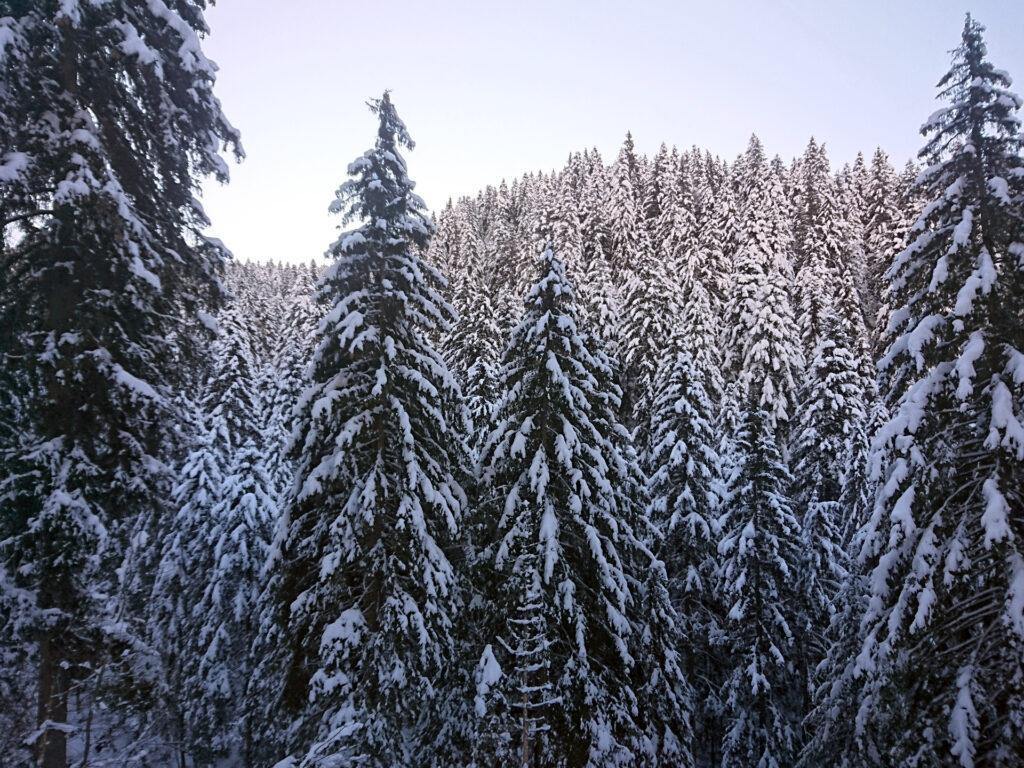 la meraviglia del bosco dopo le recenti nevicate