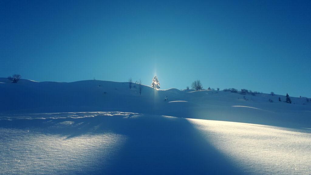il sole gioca a nascondino dietro l'albero
