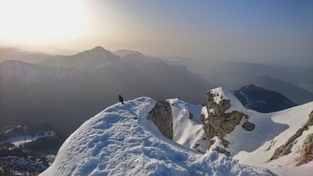 Gracchio alpino si gode il primo sole sulla cima della grignetta