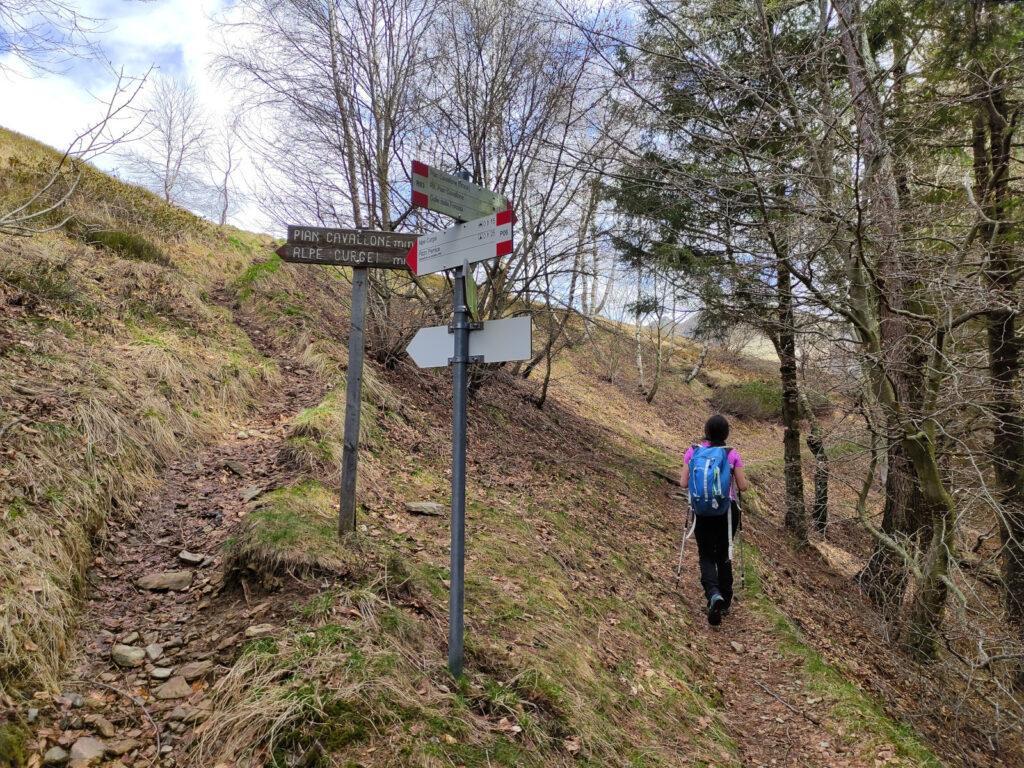 Poco prima di sbucare all'Alpe Curgei. Proseguiamo dritti verso Pian Cavallone