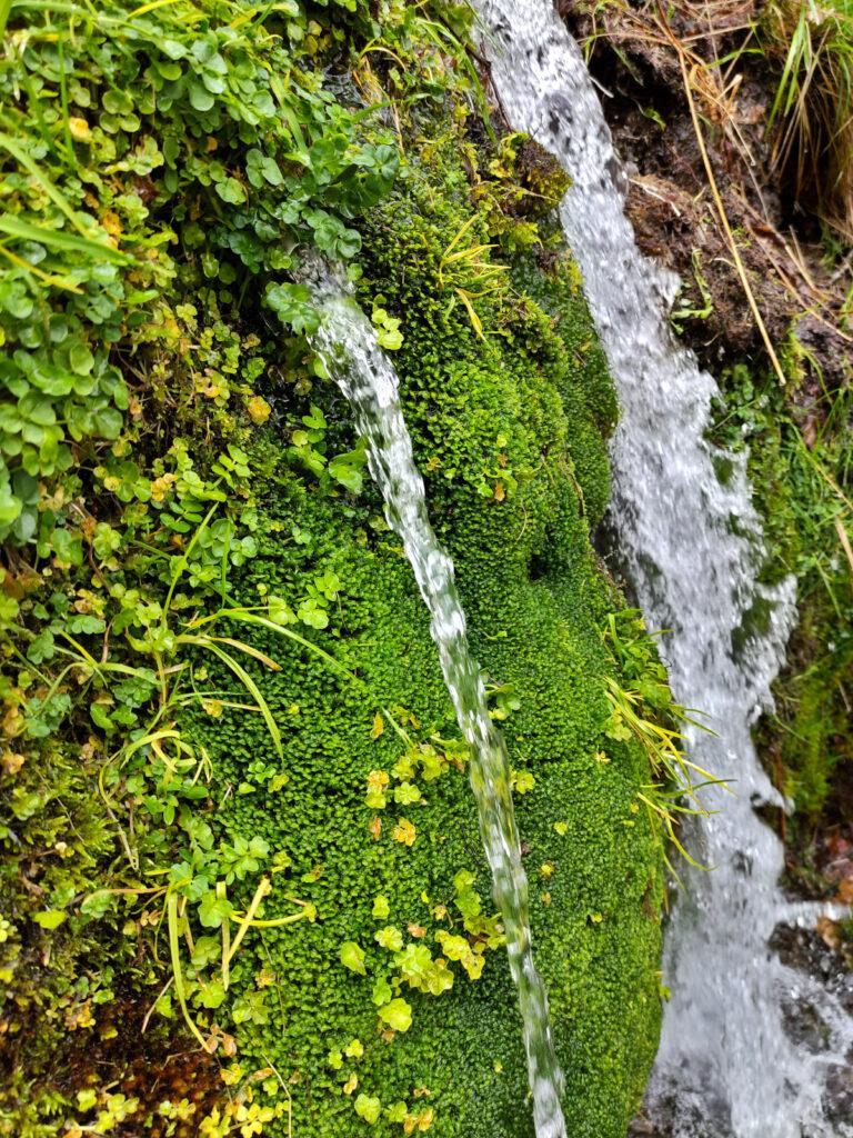 questa fonte ha coltivato un muschio verdissimo