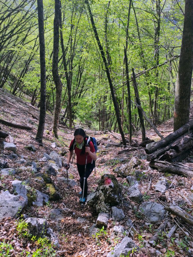Il bosco sale ripido ma la traccia in questa parte è sempre evidente e ben segnata da bolli rossi