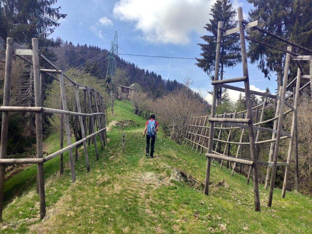 In pochi minuti si raggiunge il Passo Ortighera dove si trovano queste strutture che sembrano degli essicatoi. Di cosa però non si sa