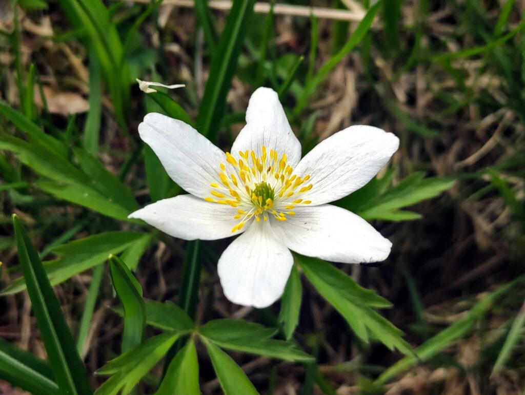 Dettaglio di uno dei mille fiori incontrati lungo il percorso