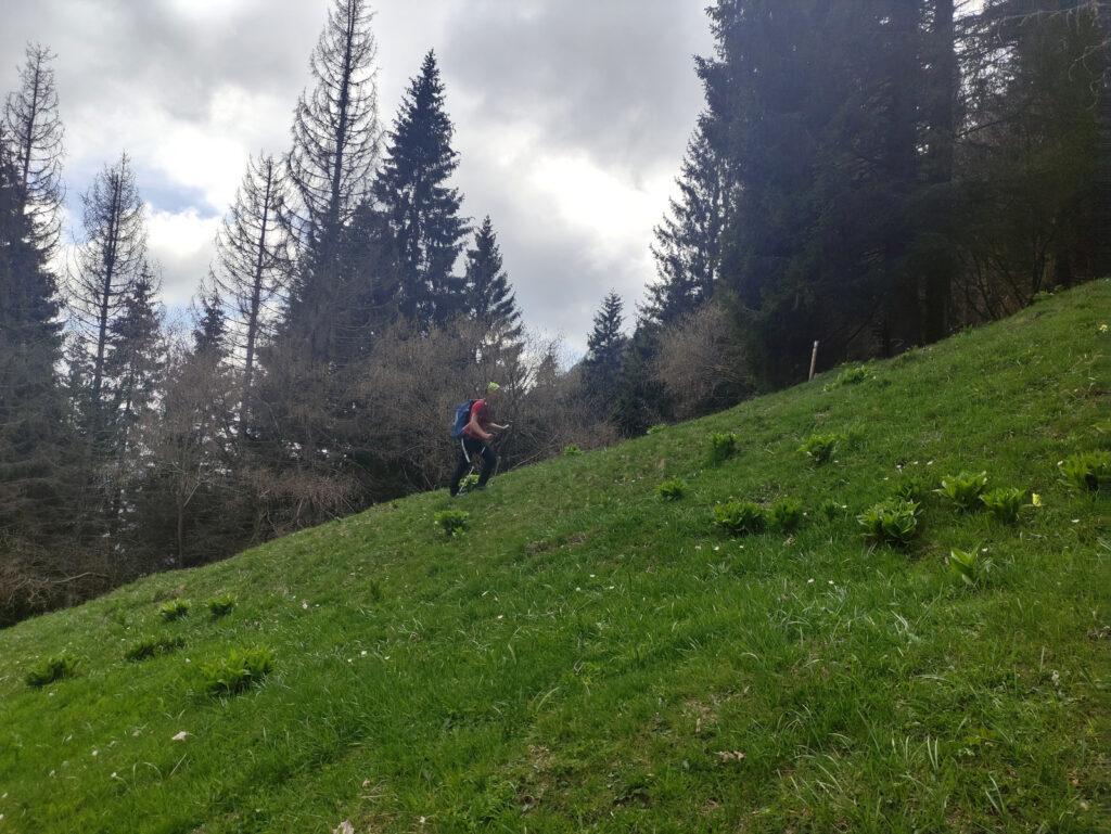 Giunti alla baita Moss si sale dritti per prati lungo la cresta verso la cima
