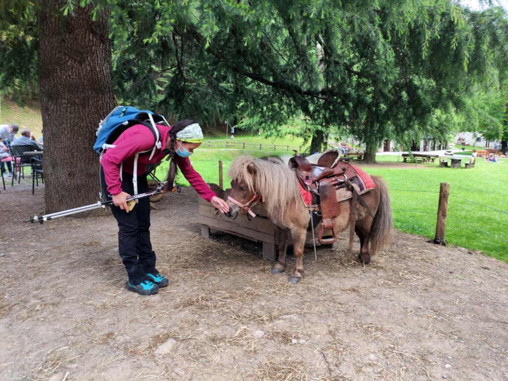 Uno dei pony dell'agriturismo che porta a spasso i bambini