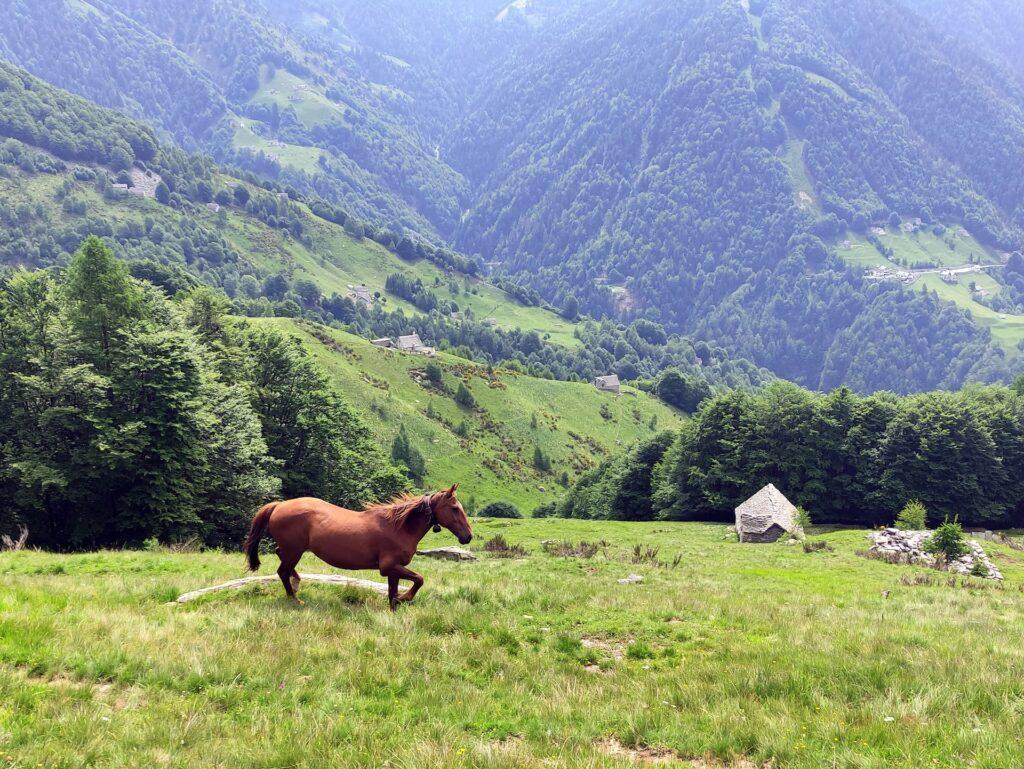 ma non di sole mucche vive l'uomo: ci sono anche cavalli e asinelli