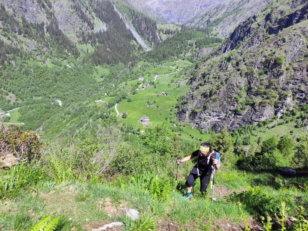 Erica lungo la ripida rimonta nel bosco con l'alpe Campo sullo sfondo