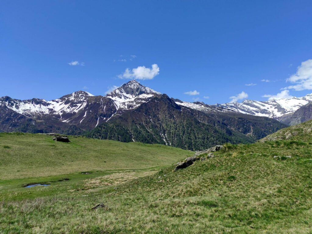 Dai prati dell'Alpe Cama il pizzo del Ton troneggia tra le altre cime