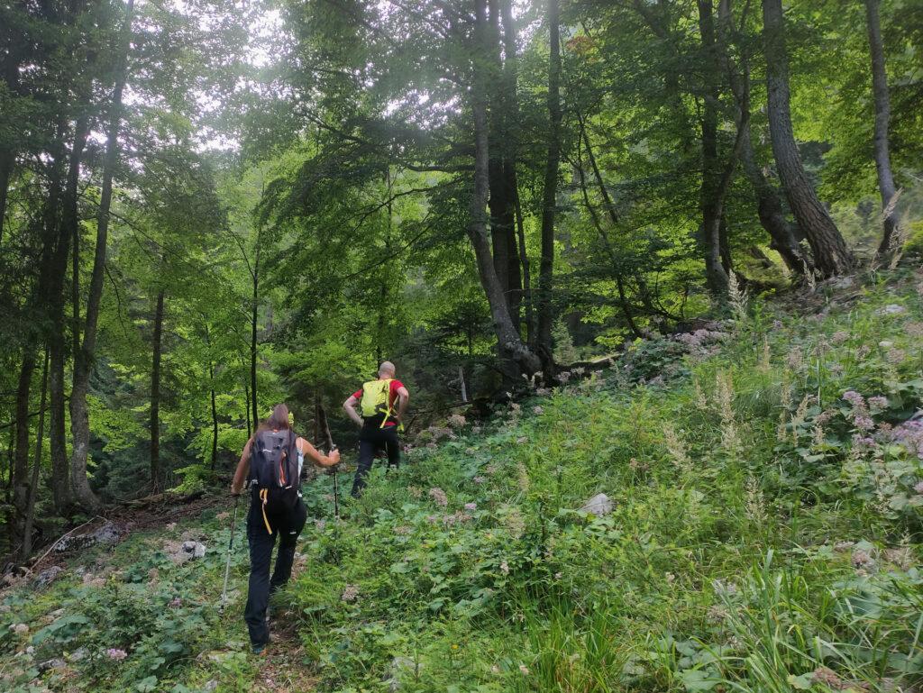il primo tratto di sentiero nel bosco, dopo aver abbandonato la forestale, è poco visibile